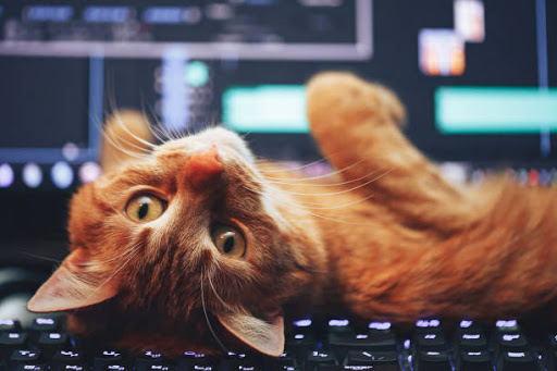 chat + clavier